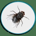 Désinsectisation des mouches