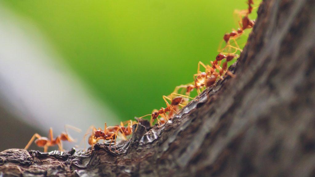 Désinsectisation des fourmis en Loire Atlantique
