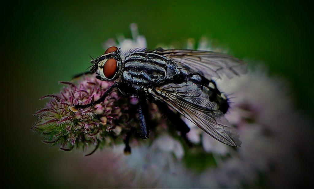 Desinsectisation de mouches en Vendée