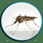 Désinsectisation de moustiques