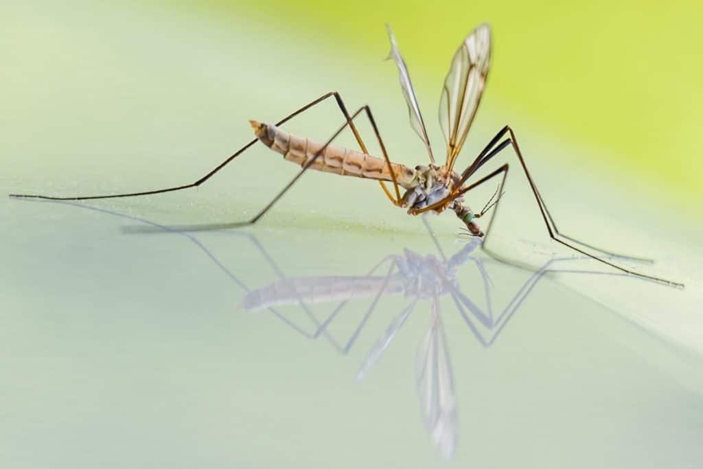 Désinsectisation de moustiques en Vendée
