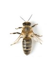 Lutter contre les abeilles